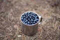 Schale mit Blaubeeren im Wald Stockfotografie