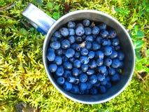 Schale mit reifen Blaubeeren aus den Grund umfasst mit Moos Lizenzfreie Stockfotos