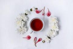 Schale schwarzer Tee in einem Kreis von weißen Chrysanthemen auf einem weißen Hintergrund Lizenzfreie Stockfotografie