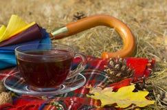 Schale schwarzer Tee mit Regenschirm und Schal am Herbst Stockfoto