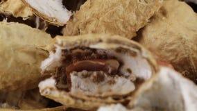 Schale von amerikanischen Erdnüssen stock footage