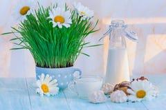 Schale von Milch und von Flasche auf einem Hintergrund des grünen Grases in einem Topf Stockfoto