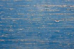 Schalen-Farben-Blau-Wand Lizenzfreie Stockfotografie