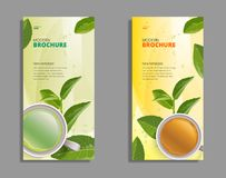 Schalenbroschüre des schwarzen Tees und des grünen Tees, Fahne, verlässt Vektor Lizenzfreie Stockbilder