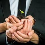 Schalenförmige Hände vereinigten, um einen grünen Sprössling zu schützen Stockfotos
