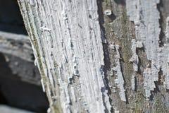 Schalenfarbe auf altem Holz lizenzfreie stockfotos