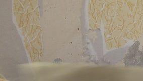 Schalentapete auf Trockenmauer stock video footage