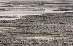 Schalentier- und Fischfarmen Stockfotografie