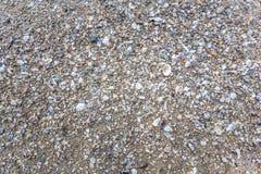 Schalentiere auf dem Strand Stockbilder