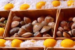 Schalentiere am Fischmarkt Stockbilder