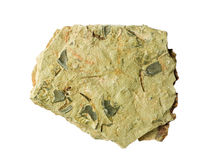Schalie met trilobitefossielen Royalty-vrije Stock Afbeelding