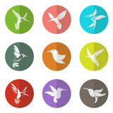 Schaltgruppe des Kolibris im Kreis Stockbilder