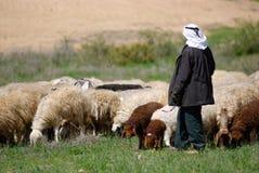 schapen Stock Foto