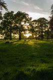 Schapen bij zonsondergang Stock Foto's