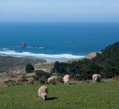 Schapen die in de voorgrond, in de achtergrondsandfly Baai in Otago-Schiereiland dichtbij Dunedin in Nieuw Zeeland weiden stock foto's