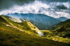 Schapen die in Karpatische bergen weiden Royalty-vrije Stock Foto