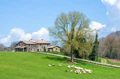 schapen die met een oud plattelandshuisje op de achtergrond weiden Royalty-vrije Stock Foto