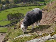 Schapen die met hieronder vallei weiden stock afbeelding