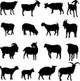 Schapen en geiten Royalty-vrije Stock Afbeelding