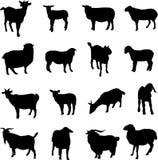 Schapen en geiten Royalty-vrije Stock Foto