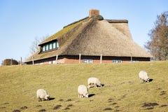 Schapen en huis met met stro bedekt dak Stock Fotografie