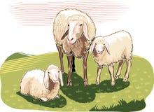 Schapen en lammeren vector illustratie