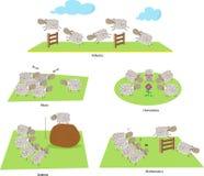 Schapen en Onderwijs vector illustratie