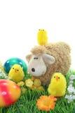 Schapen met eieren en kuikens in een weide royalty-vrije stock fotografie