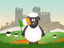 Schapen met Ierse vlag Royalty-vrije Stock Fotografie