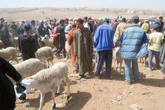 Schapen openluchtmarkt in Marokko Royalty-vrije Stock Afbeeldingen