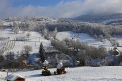 Schapen in sneeuw Royalty-vrije Stock Fotografie
