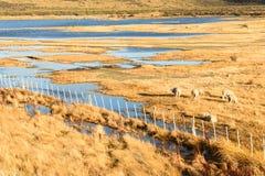 Schapenlandbouwbedrijf in Patagonië en de meren Stock Fotografie