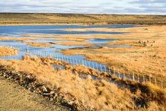 Schapenlandbouwbedrijf in Patagonië en de meren Stock Afbeeldingen