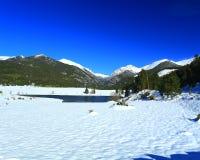 Schapenmeren in Rocky Mountain National Park Royalty-vrije Stock Fotografie