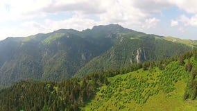 Schapentroep in Ciucas-Bergen, Roemenië stock footage
