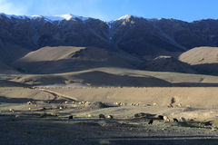 Schapenweiland bij de wilde bergen van Kyrgyzstan Stock Afbeeldingen