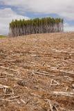 Scharf geschnittener Wald Stockfotografie