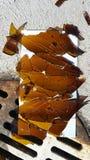 Scharfes defektes Flaschenglas durch rostigen Sturmabfluß im Parkplatz lizenzfreie stockbilder