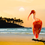 Scharlachrot IBIS-Vogel Lizenzfreie Stockfotos