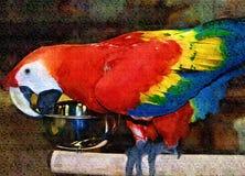 Scharlakansröd Macawmålning arkivbild