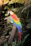 Scharlakansröda Macaws Arkivfoton