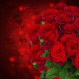Scharlakansröda rosor på mörk bakgrund Arkivfoto