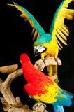 Scharlaken ara en van een blauw-goudara papegaaien Stock Afbeeldingen