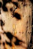 Schatten auf Baum Stockbilder