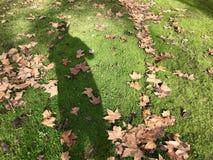 Schatten auf dem Rasen lizenzfreies stockbild