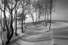 Schatten auf dem Schnee stockbilder