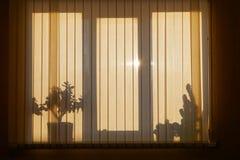 Schatten auf Fenster mit Jalousien Lizenzfreie Stockfotografie