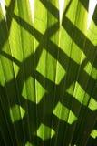 Schatten auf grünen Palmblättern stockfotografie
