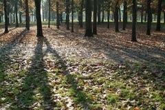 Schatten auf Herbstblättern Stockfotografie