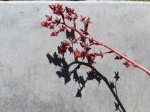 Schatten auf konkretem Muster Drastischer heller Weinlesehintergrund der abstrakten Kunst stockfoto